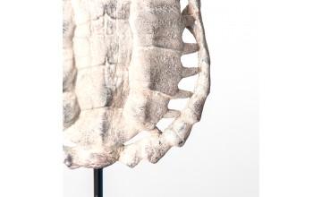 27228 - Escultura caparazón tortuga