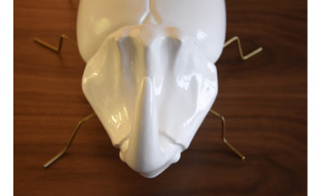 SS000180-Besouro Branco